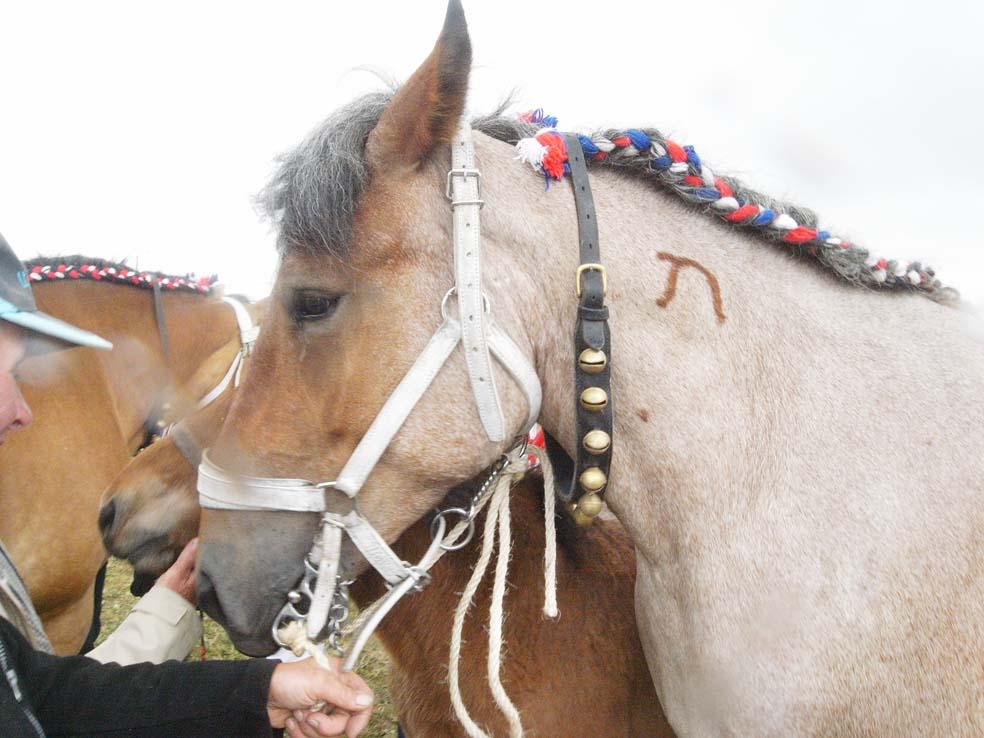 les-chevaux-de-traie